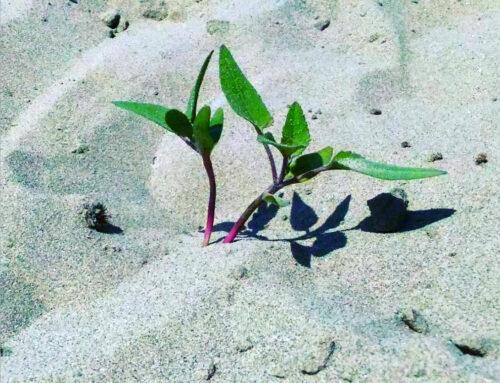 Poesia sull'Estinzione: gli ultimi giorni